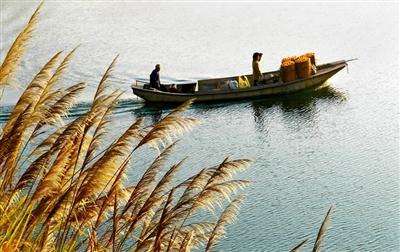 2011杭州千岛湖(界首)第五届柑橘节